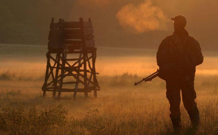 Upoważnienie do wykonywania polowania indywidualnego – stanowisko PZŁ