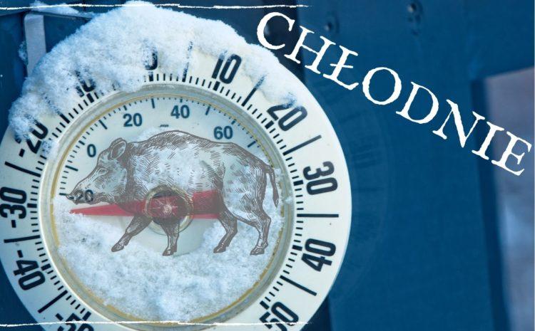 Przyczyny zmian warunków przetargu na zakup chłodni